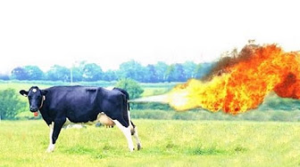 Burger King releases ad pitching green diet for cows to reduce flatulence